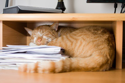 Why Do Cats Lay on Paper? — Senior Cat Wellness