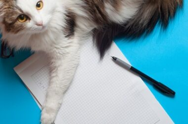 why do cats sleep on paper?
