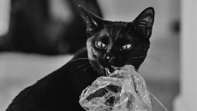 why does my cat eat weird things?