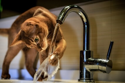 why would a cat not want to drink water?