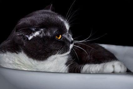 cats ears turned sideways