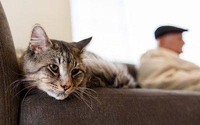 cognitive-dysfunction-syndrome-in-cats