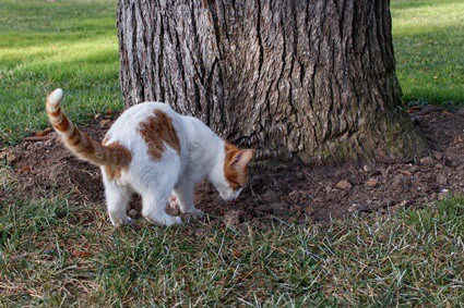 do cats bury food for later?