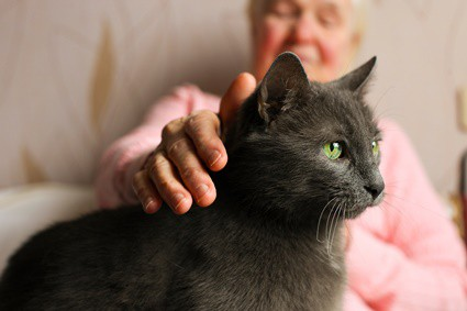 how to tell if cat has dementia