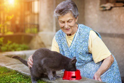 signs of dementia in older cats