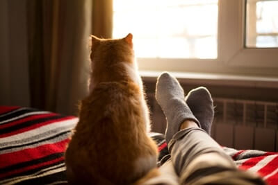 why do cats like feet smell?