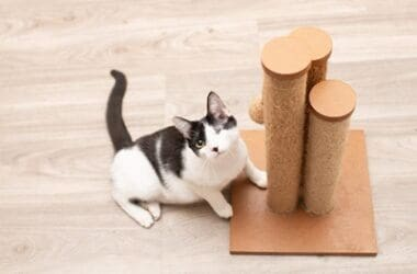 can cats have learning disabilities?