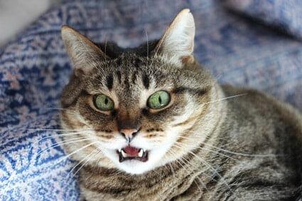 can cats sense human anxiety?