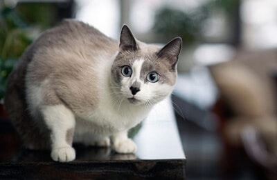 can cats sense when something is wrong?