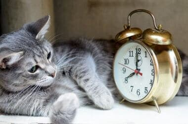 can cats tell time?