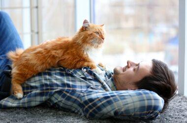characteristics of guys who like cats