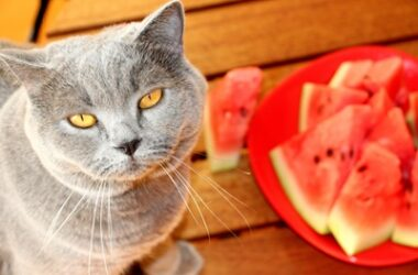 is-watermelon-safe-for-cats?