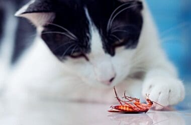 can cats get sick from cockroaches?