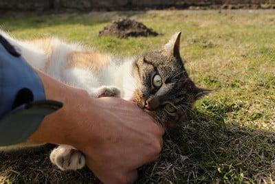 do cats bite affectionately?
