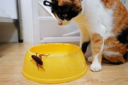 is it normal for cats to eat cockroaches?