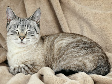 why do cats close their eyes when sleeping?