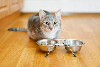 why do cats leave food in their bowl?