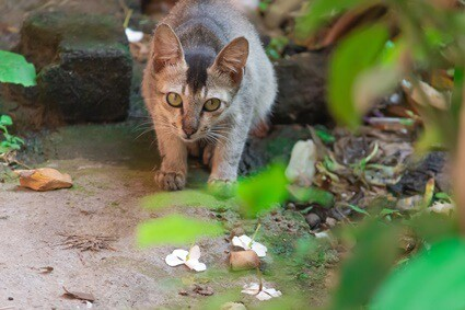 Do Cats Prefer To Be Alone When Dying?