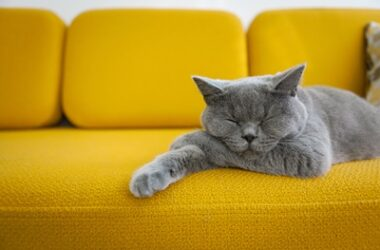 are cats supposed to breathe fast while sleeping?