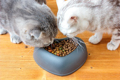 do cats need separate food bowls?