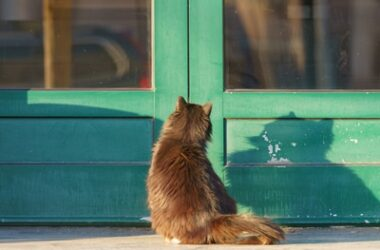 why do cats go missing?