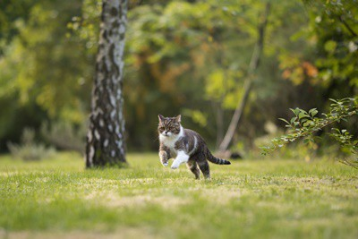 why do cats run away from humans?