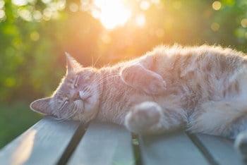 Cat Sleeping Flat on Side