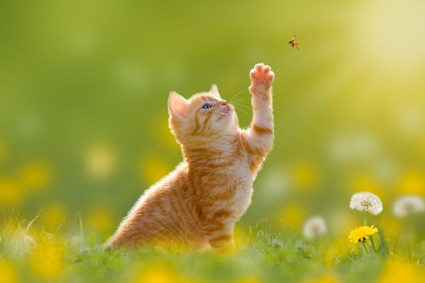 are ladybugs toxic to cats?