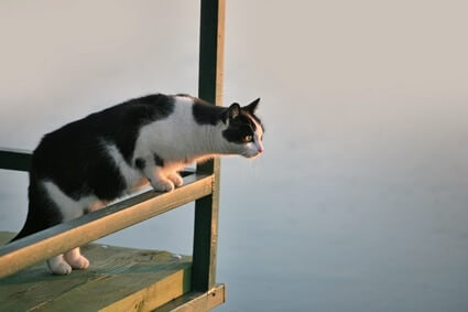 can a cat jump from the second floor?