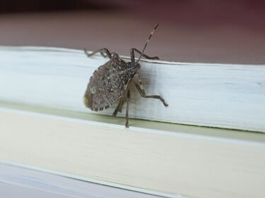 can stink hurt bugs cats?