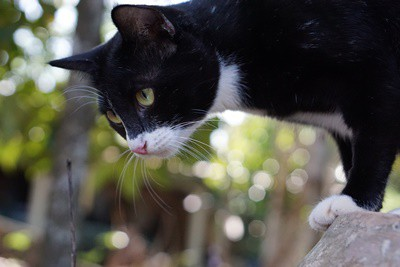 cat-losing-hair-in-corner-of-eye