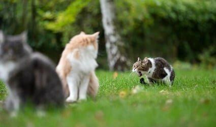 cat throwing up saliva foam