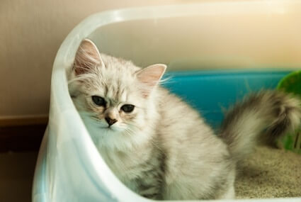 do cats clean themselves after pooping?