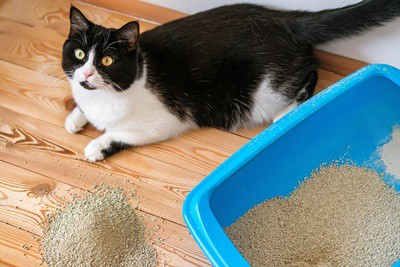 how to get your cat to clean its bum