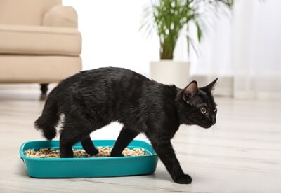 why-does-my-cat-howl-before-and-after-using-litter-box