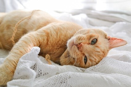 What color are cats most attracted to?