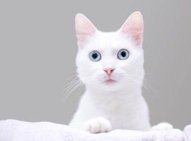 What do dilated cats eyes mean?