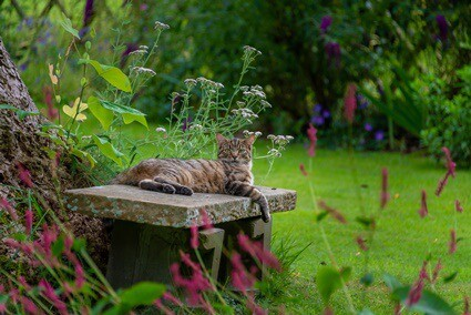 Why would a cat suddenly disappear?