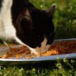 can cats eat cooked chicken and rice?