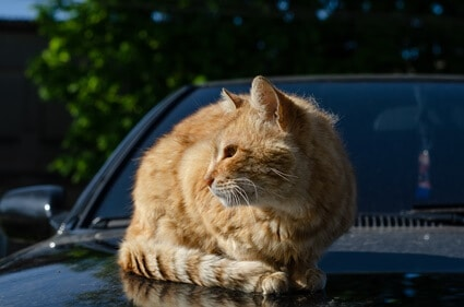 cat fur discoloration