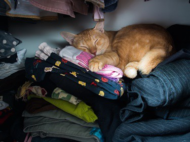 cat-likes-sleeping-on-my-dirty-clothes