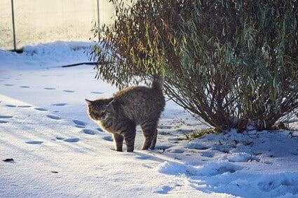 cat-phantom-spraying