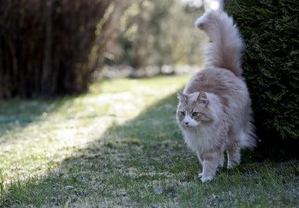cat-pretending-to-spray