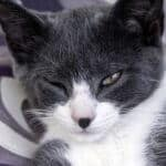 cat squinting one eye no other symptoms