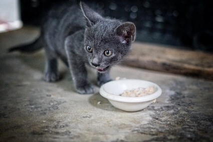 chicken and rice for cats with diarrhea