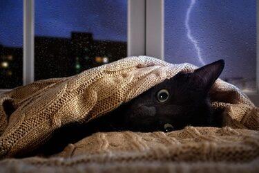 does weather affect cat behavior?