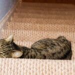 how can i stop my cat scratching the stairs carpet?