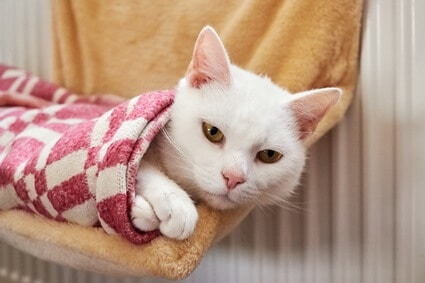 how do i know if my cat is cold?