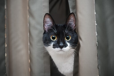 what colors can cats see?