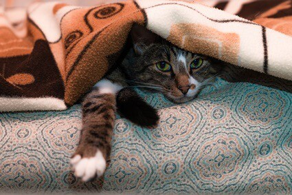 what temperature do cats get cold?